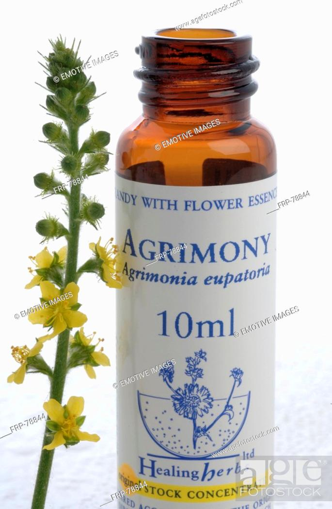 Stock Photo: Homopathic remedies: Agrimony.