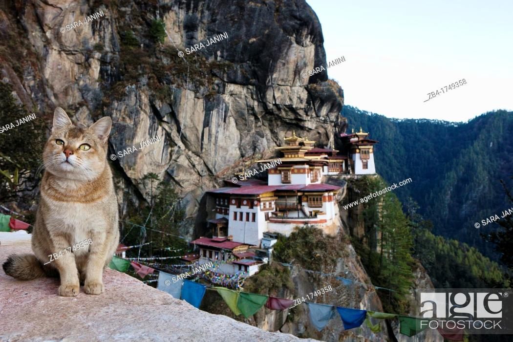 Stock Photo: A cat in a mirador on the way to the Taktsang Monastery Tiger's Nest, Paro Valley, Bhutan, Asia.
