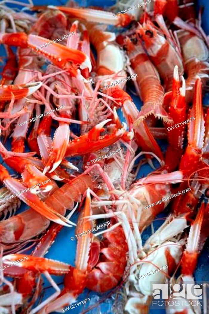 Stock Photo: Mediterranean crustacean, Nephrops Norvegicus.