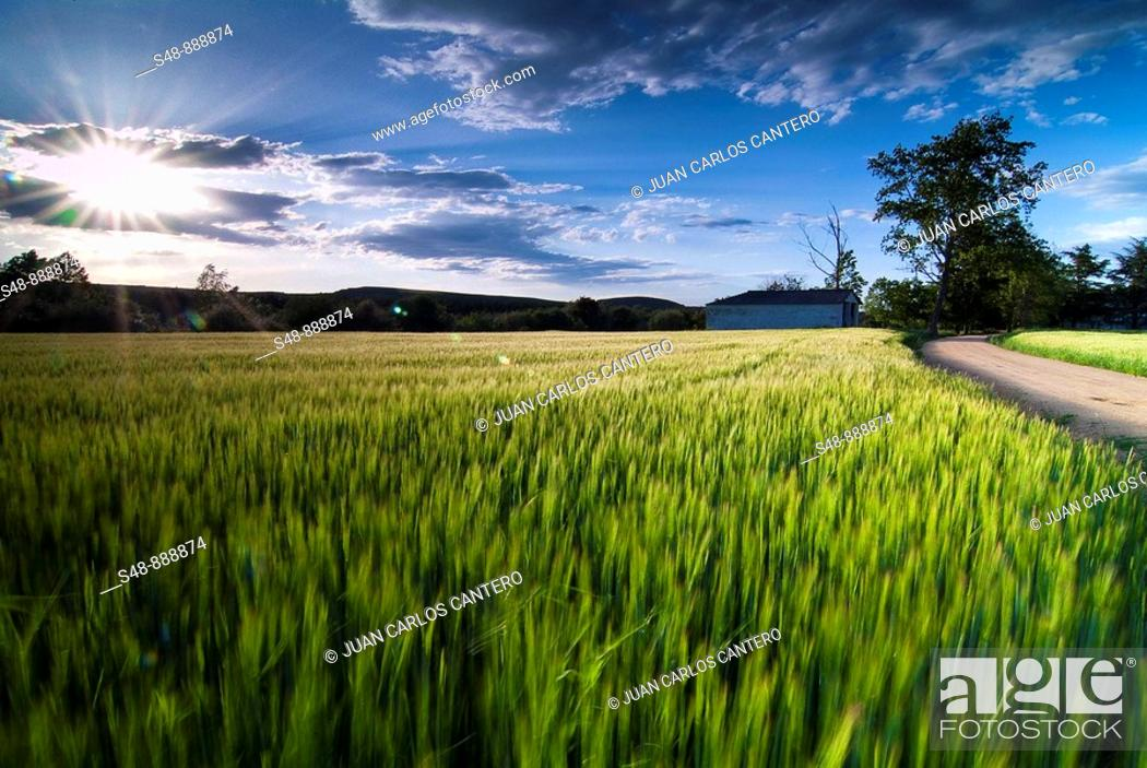 Stock Photo: Cereal fields. La Rioja.