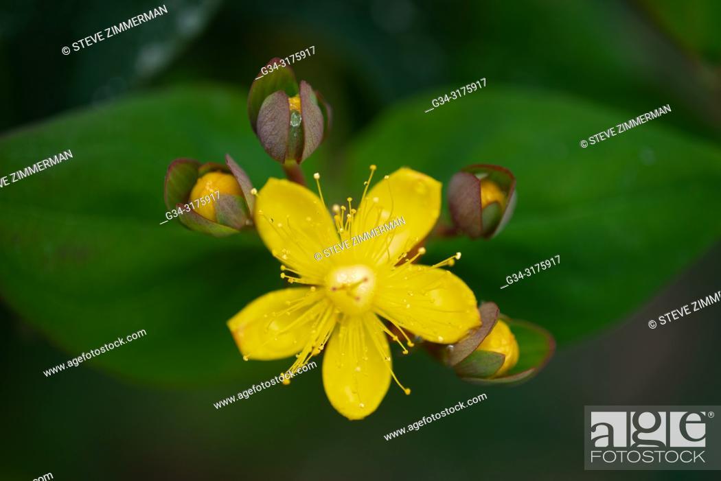 Imagen: Five Petals at the Front. Bellevue, Washington, USA.