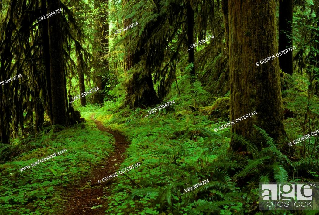 Stock Photo: Ancient forest off Fall Creek National Recreation Trail, Willamette National Forest, Oregon.