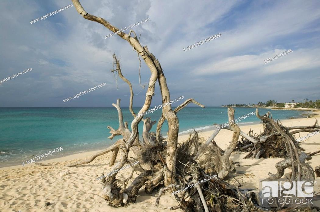 Stock Photo: Cayman Iceland, Grand Cayman, Long Point, lake, beach, trees, roots, perished, jetsam, ABC-Inseln, little one Antilles, Dutch Antilles Caribbean island.