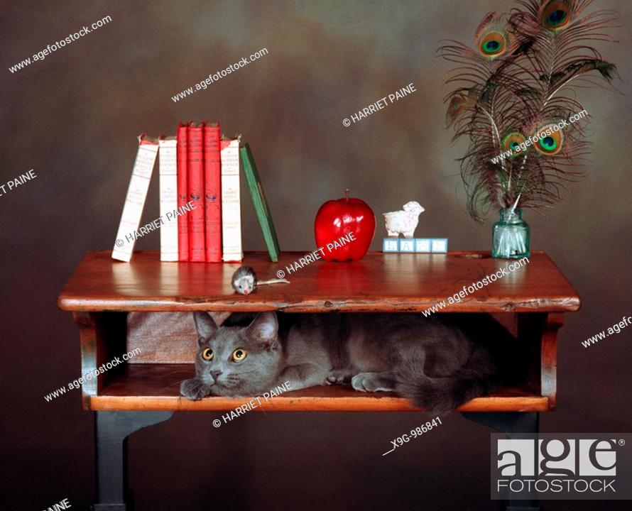 Stock Photo: Cat and mouse in old desk.