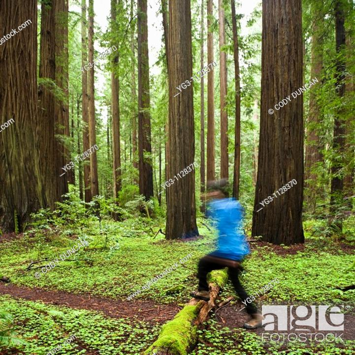 Stock Photo: Person hikes along forest trail, Humbolt Redwoods state park, California.