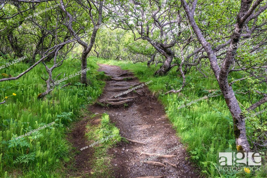 Stock Photo: Trail to Svartifoss in Skaftafell National Park in southeast part of Iceland.