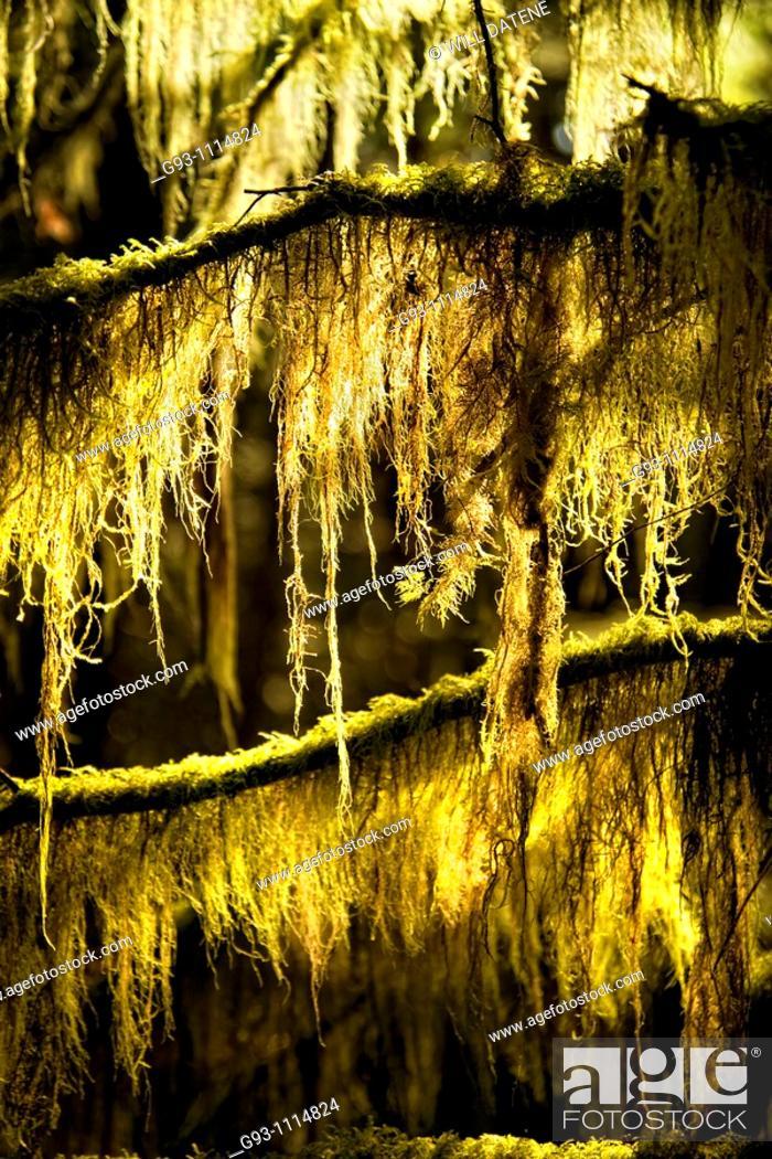 Stock Photo: close up moss.