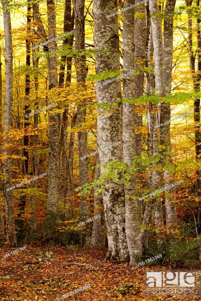 Stock Photo: Autumn in the forest Betato.