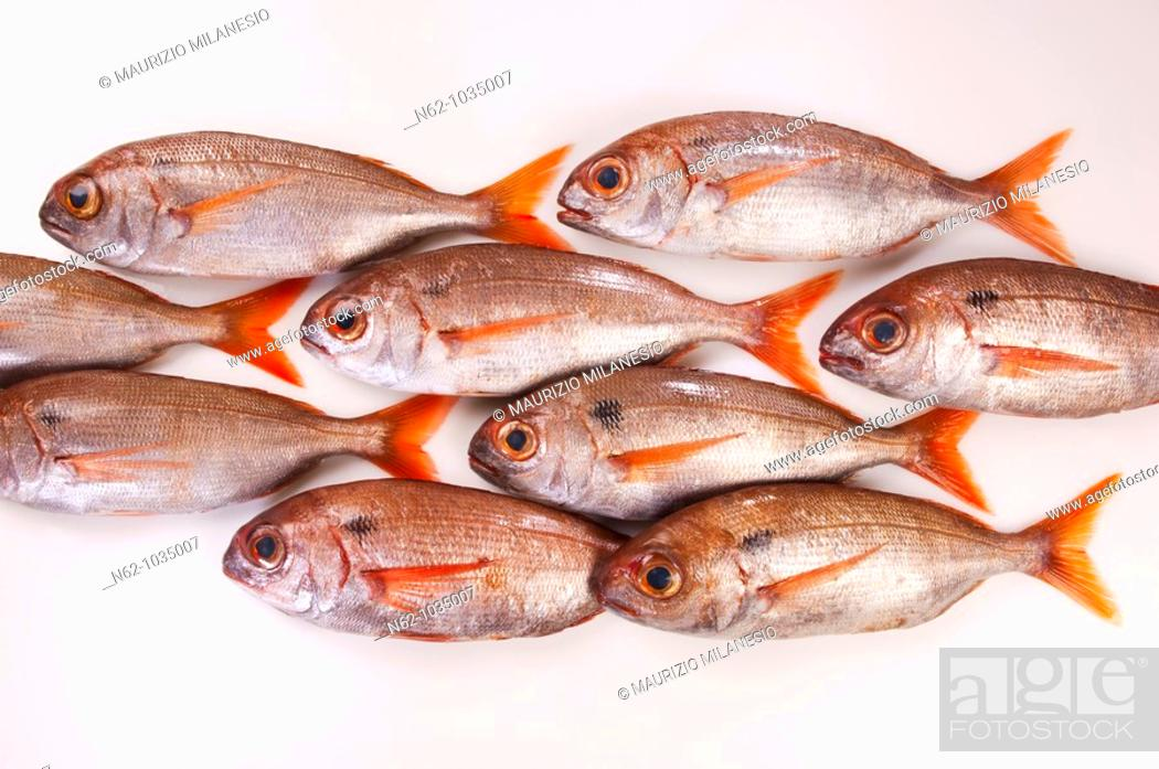 Stock Photo: Sea fish on the white table put online as a group of fish that swims.