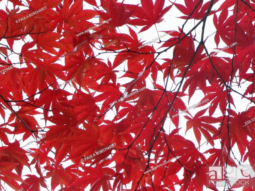 Stock Photo: Fall foliage, Ridgewood, New Jersey, USA.