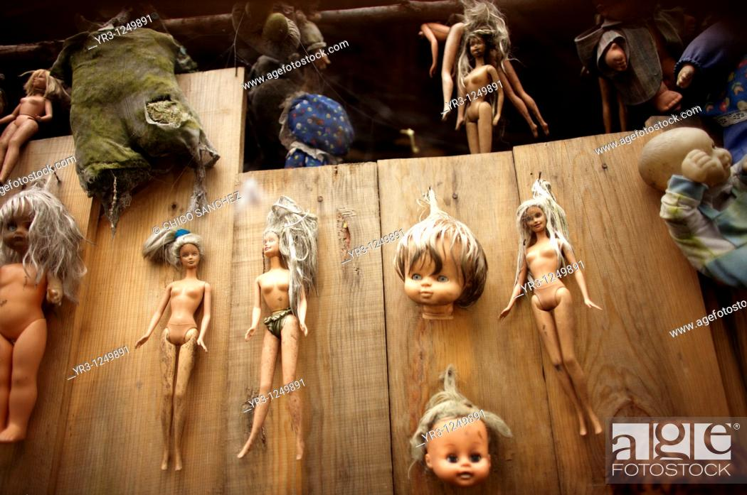 Stock Photo: Dolls hang on a tree on the Island of the Dolls in Xochimilco, southern Mexico City. The late Don Julian turned his 'chinampa.