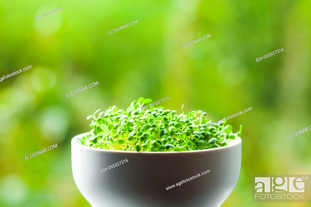 Stock Photo: organic micro greens in a ceramic bowl against defocused green nature background.