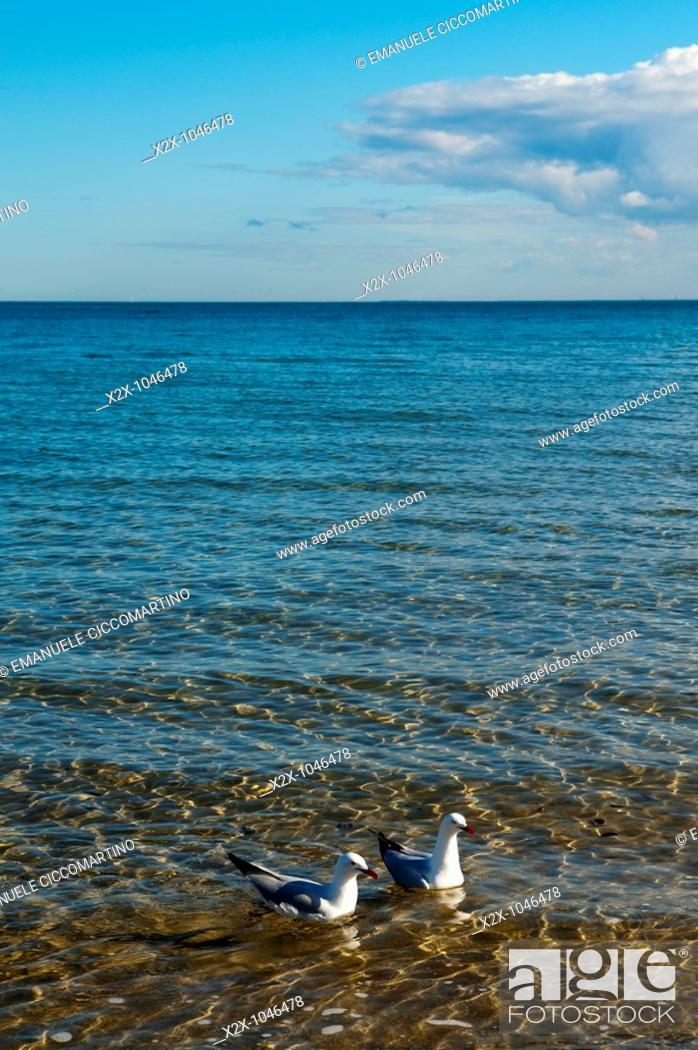 Stock Photo: Seagulls, St  Kilda Beach, Melbourne, Victoria, Australia.