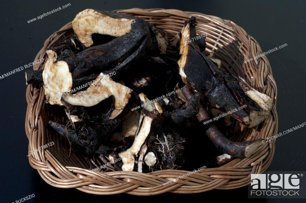 Stock Photo: Beinwellwurzel, Symphytum; officinale.