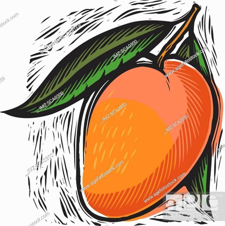 Stock Photo: fresh mango.