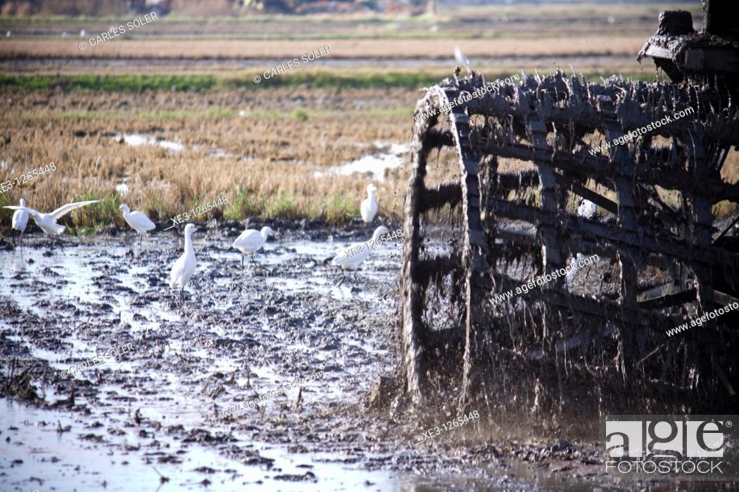 Stock Photo: Tractor trabajando un campo de arroz (Albufera ed Valencia).