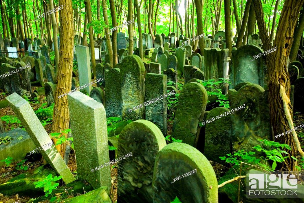 Stock Photo: Biggest jewish cementery in Europe. Warsaw jewish cementery, Poland.