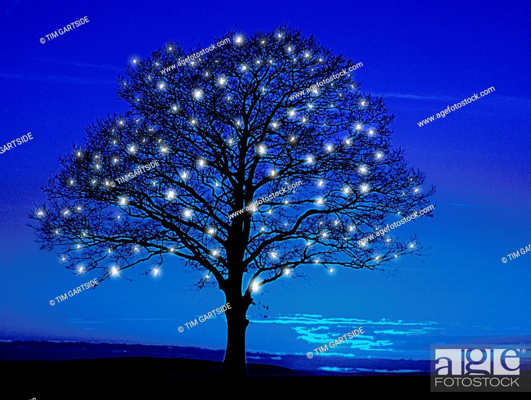 Stock Photo: blue tree with fairy lights.