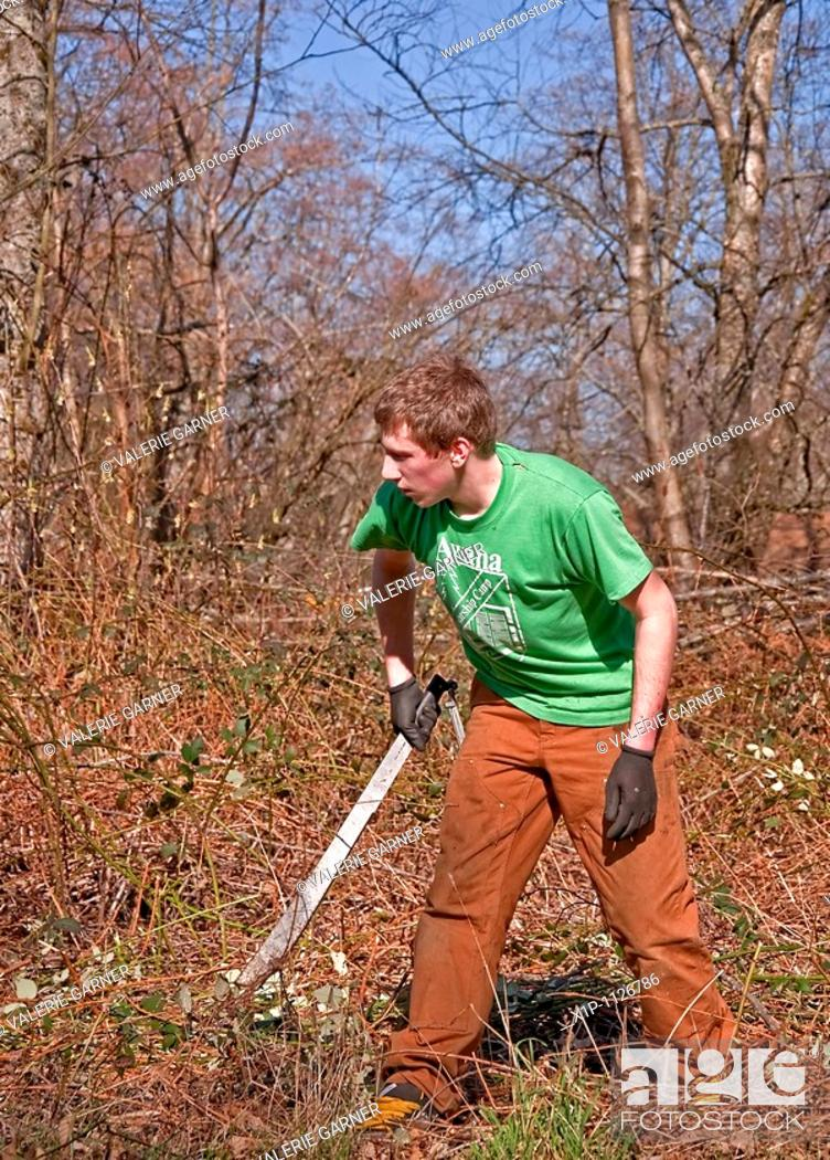 Stock Photo: his young Caucasian man in his early twenties is working hard to clear brush off the land with a machete knife His arms are scratched and bleeding from the.