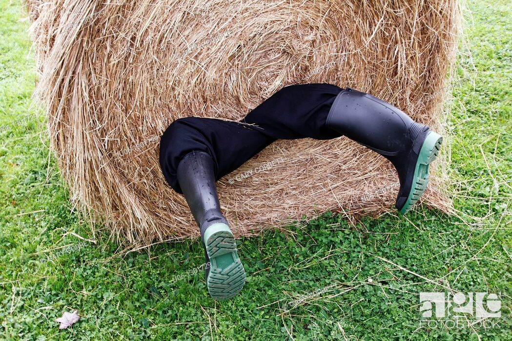 Stock Photo: A man rolled up in a hay bale with his legs hanging out.