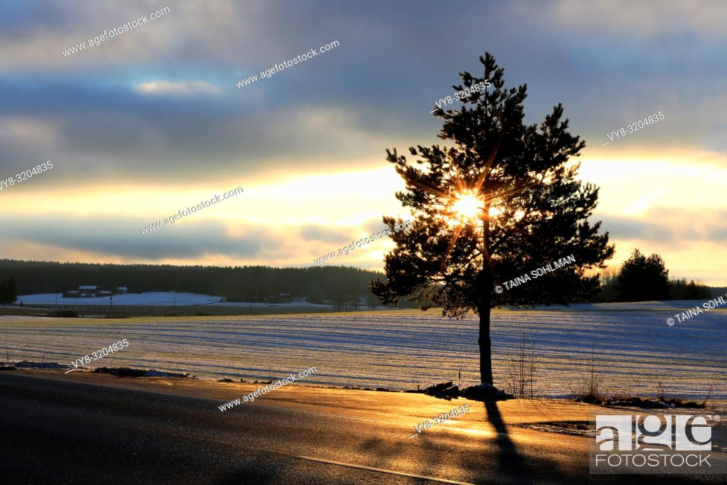 Stock Photo: Winter sunset behind a small roadside tree forms a star within the branches. Salo, Finland.