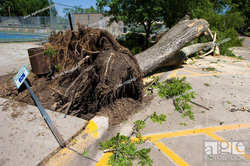 Stock Photo: A downed tree near Harmon park in Kearney, Nebraksa, May 30, 2008  Kearney was struck by an EF-2 tornado May 29, 2008.
