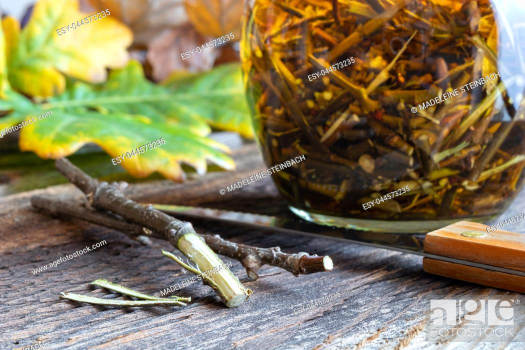 Stock Photo: Preparation of a homemade herbal tincture from oak bark.