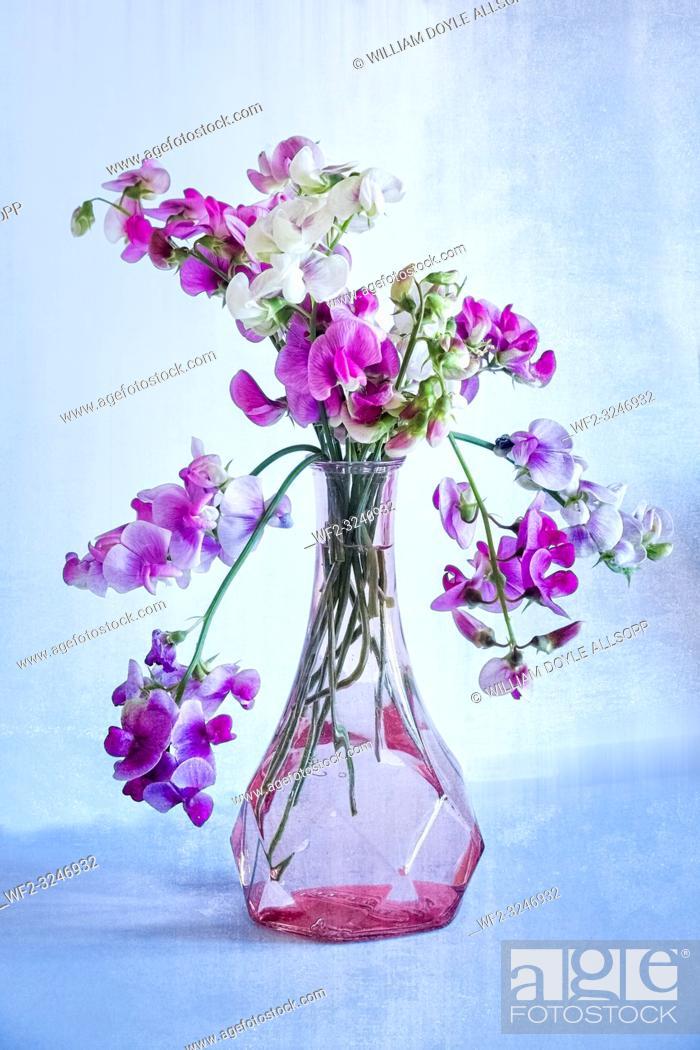 Imagen: A glass vase of Sweet Peas.