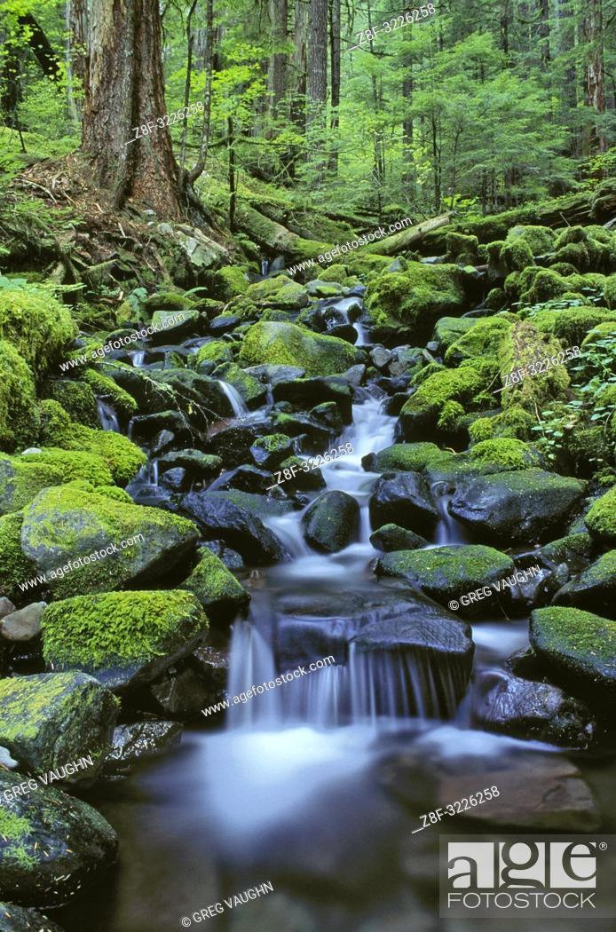 Imagen: Cascading stream along Sol Duc Falls Trail; Olympic National Park, Washington. .