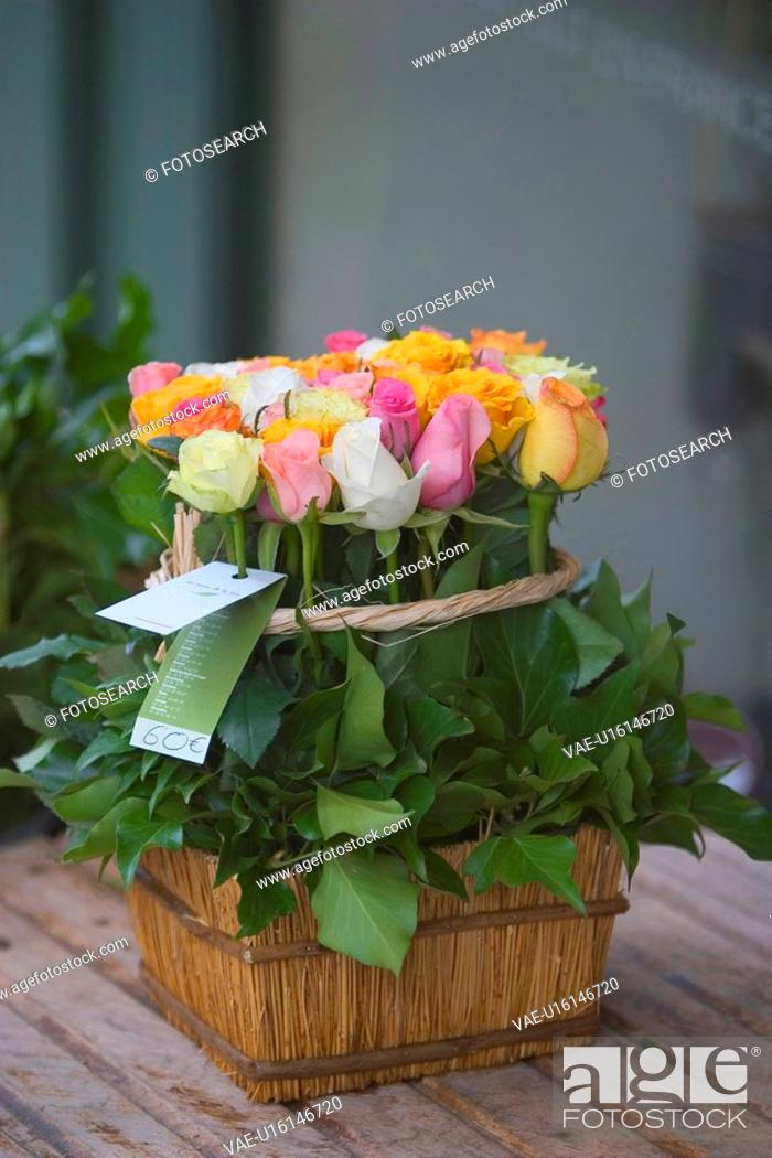 Stock Photo: blooms, blossoms, environment, colorful, flora, flower.