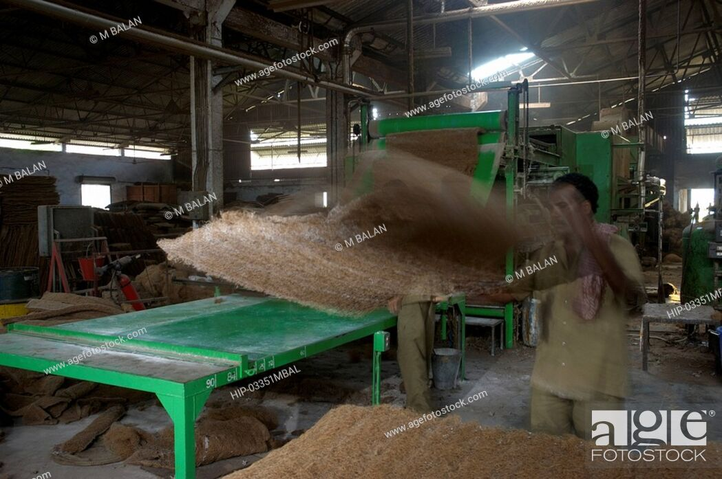 Imagen: COIR PROCESSING IN FACTORY IN ALAPPUZHA DISTRICT.