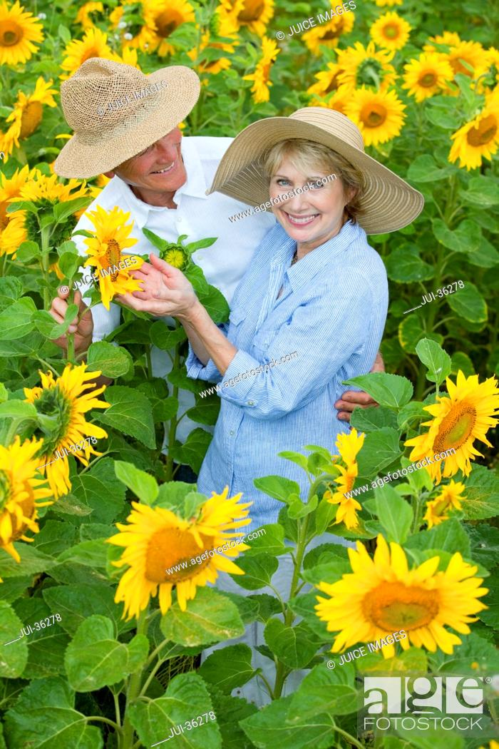 Stock Photo: Portrait of smiling couple among sunflowers in sunny meadow.