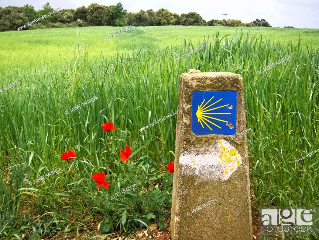 Stock Photo: Marker along the Camino de Santiago with red poppies.