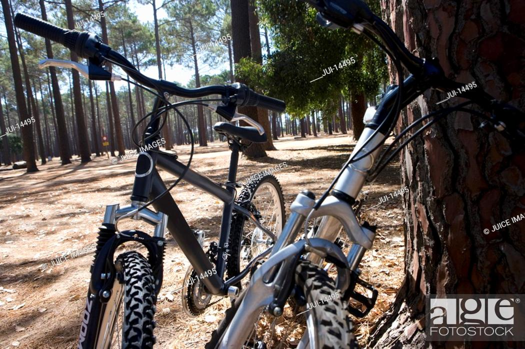 Stock Photo: Two bicycles by tree in forest, close-up.
