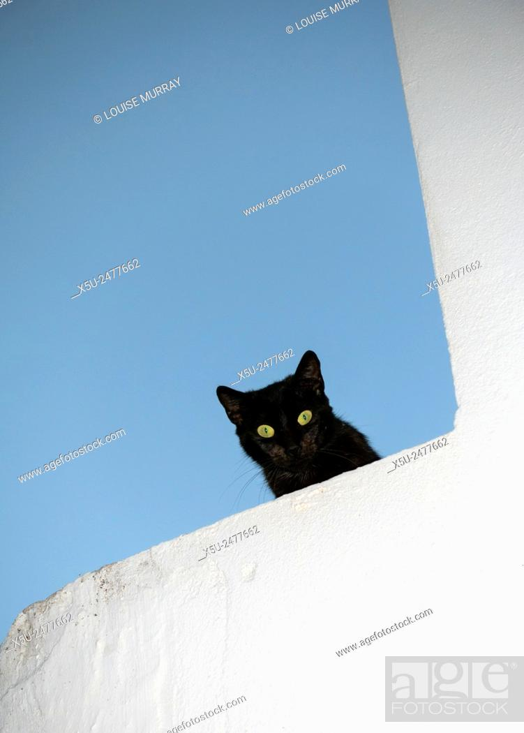 Imagen: Black cat with green eyes shares down from the top of a whitewashed wall in the picturesque village of Vejer de la Frontera.