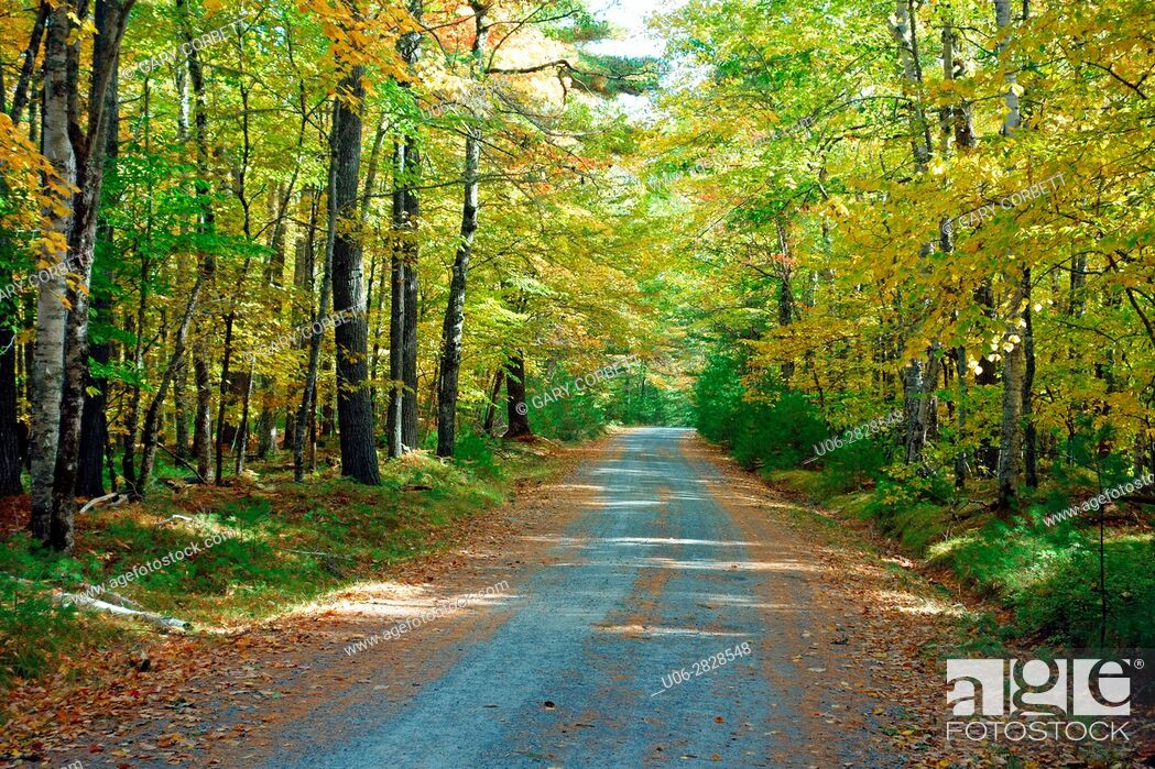 Imagen: A country road in Prince Edward island, Canada in autumn.
