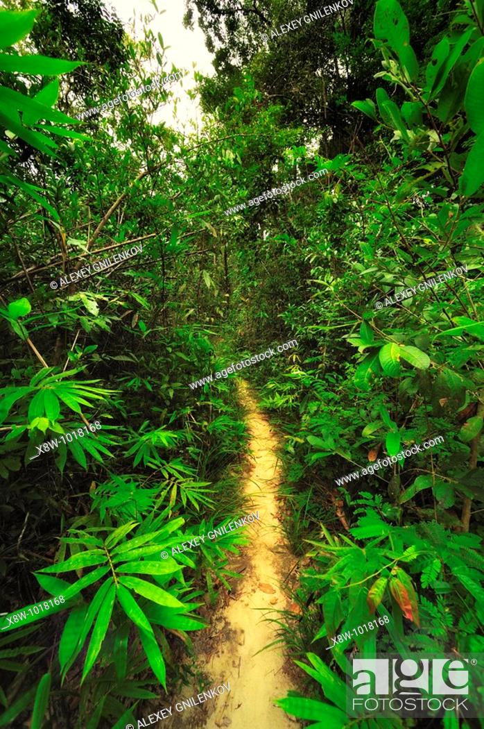 Stock Photo: A tropical rainforest is a biome found 100 degrees north or south of the equator  They are common in Asia, Australia, Africa, South America, Central America.