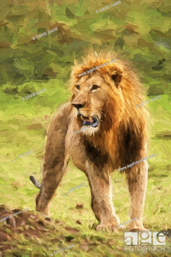 Stock Photo: Impressionist art of a proud Male Lion Panthera leo from the Masia Mara in Kenya, Africa.