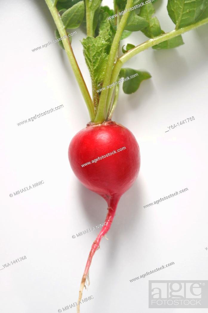 Stock Photo: Freshly picked radish on white background.