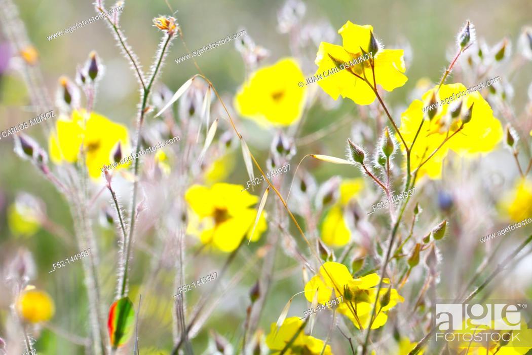 Stock Photo: Spring, Monfrague National Park, Caceres, Extremadura, Spain, Europe.