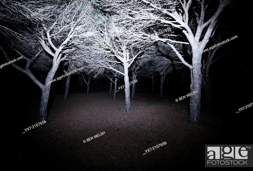 Imagen: Scary forest. Tarifa, Cadiz, Andalusia, Spain.