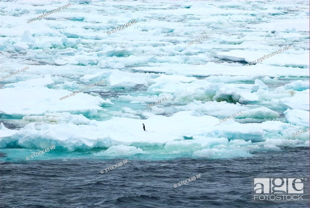 Stock Photo: Lonely adelie penguin on pack ice.