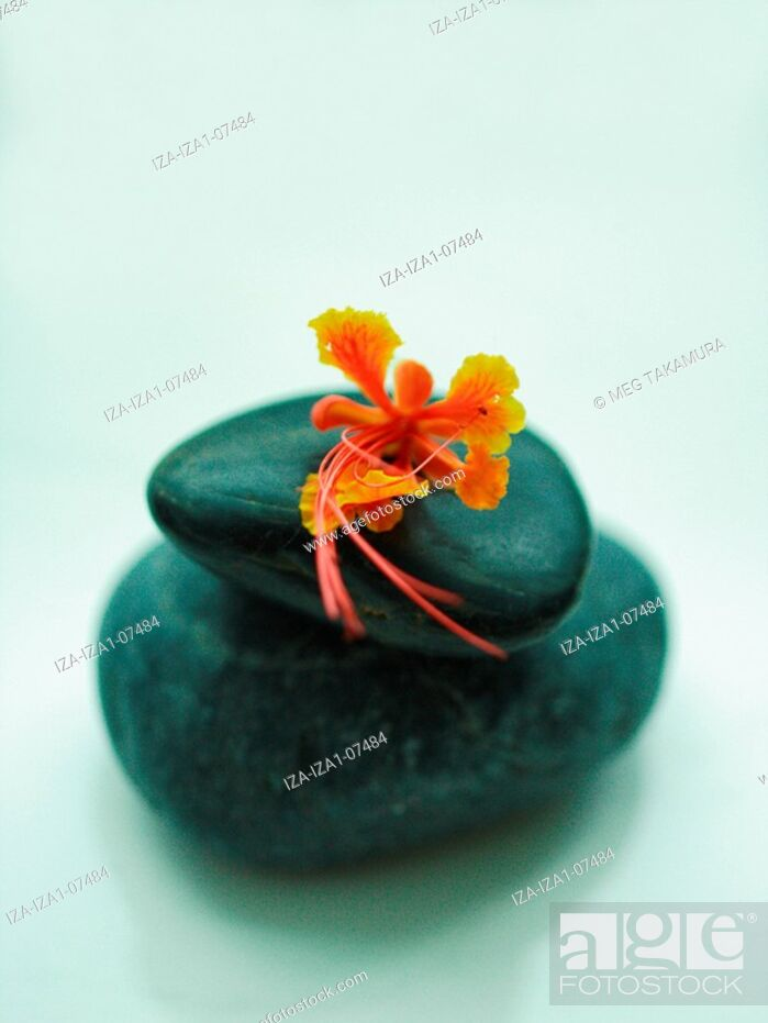 Imagen: Close-up of a flower on stones.