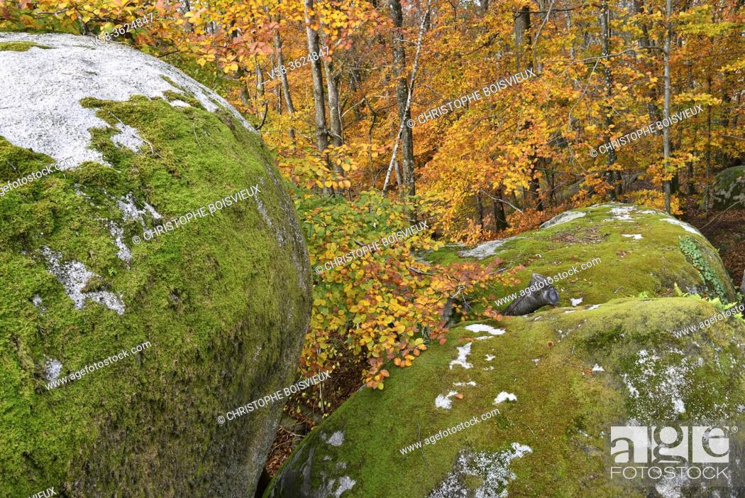 Stock Photo: France, Tarn, Sidobre region, The rock formations in autumn .