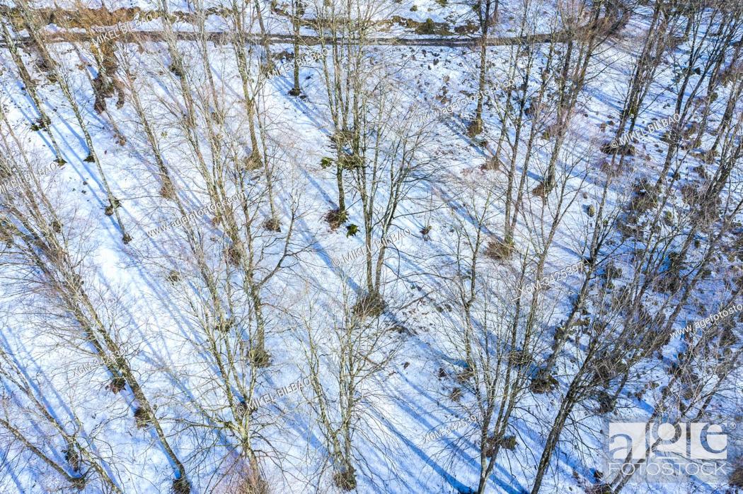 Stock Photo: Beech forest in winter. Valley of Ulzama. Navarre, Spain, Europe.