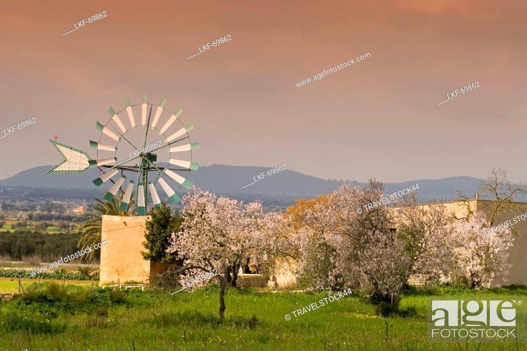 Stock Photo: Mallorca windmill, almond blossom.