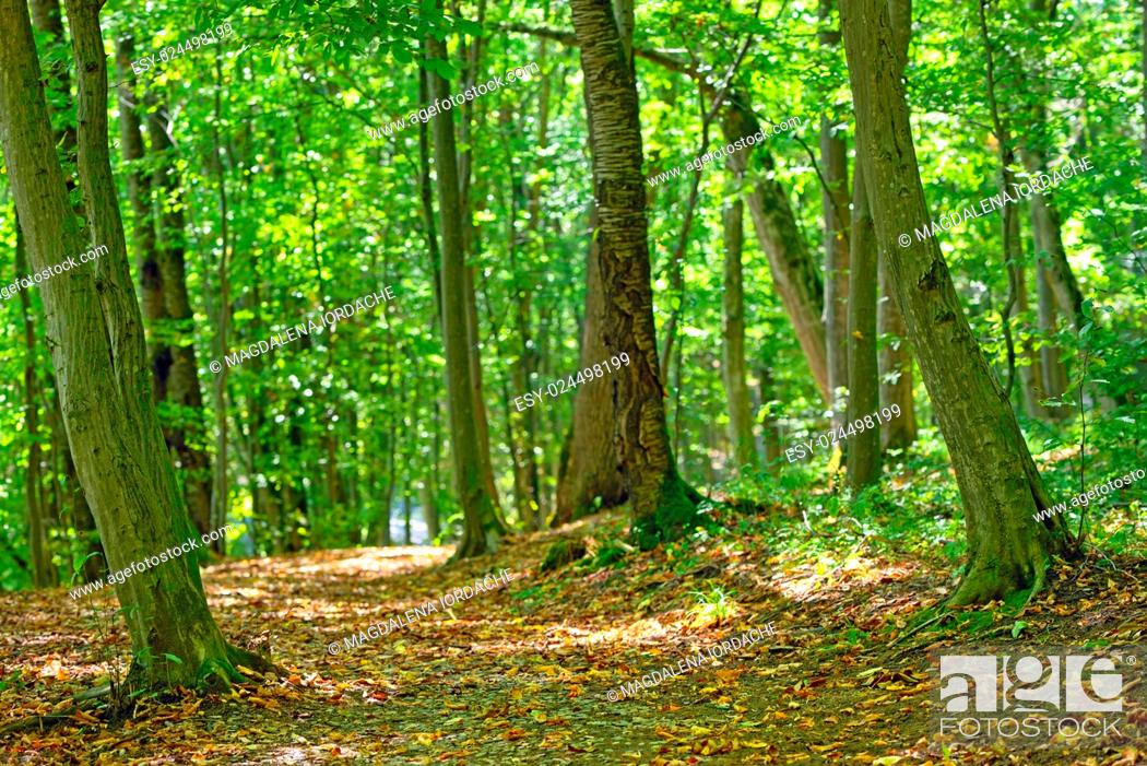 Stock Photo: Forest path in september.