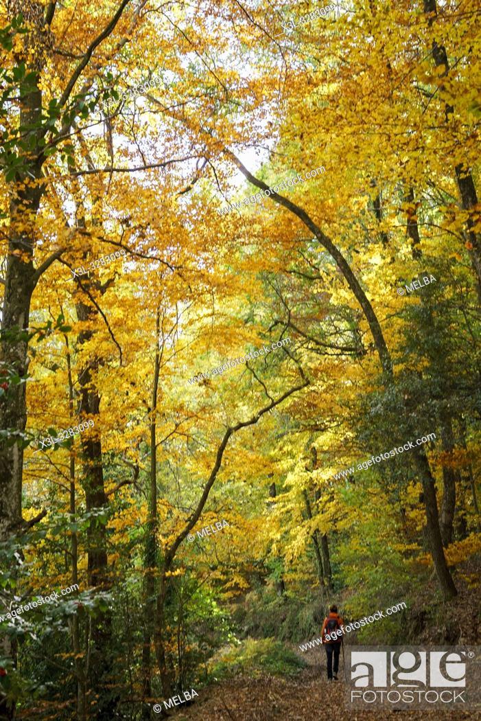 Stock Photo: Autumn. Montseny natural park. Barcelona. Catalonia. Spain.