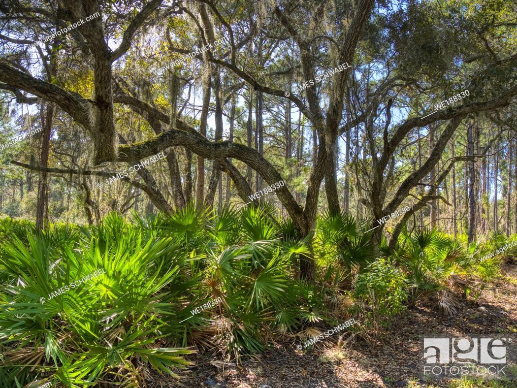 Stock Photo: Lemon Bay Park in Englewood Florida, United States.