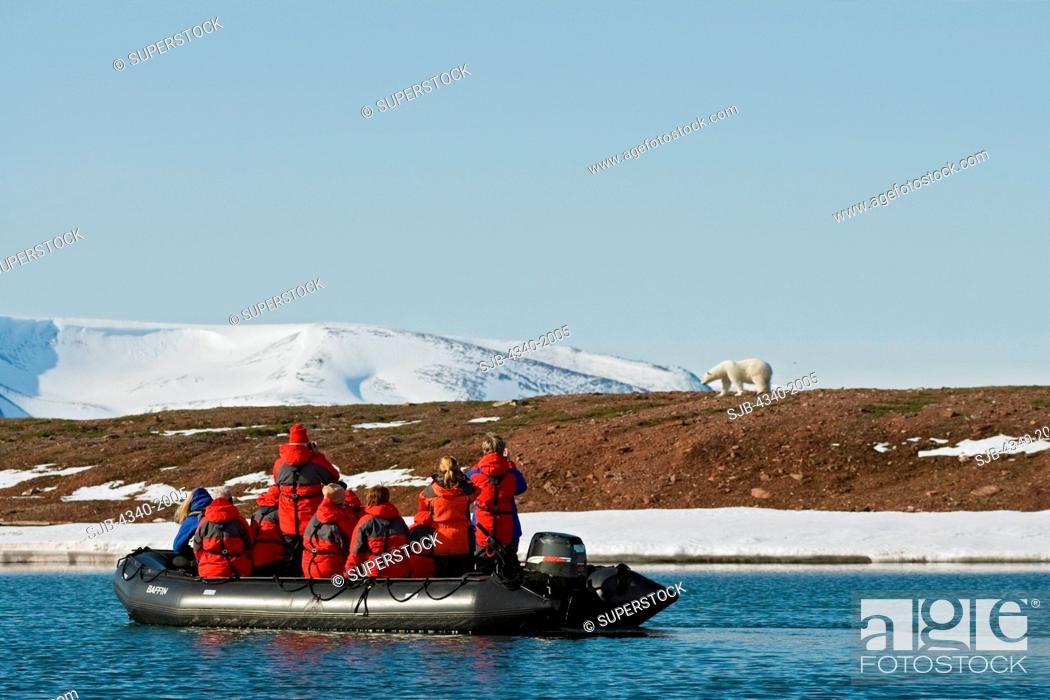 Stock Photo: Tourists in a Zodiac boat observe a polar bear Ursus maritimus sow on Andoyane Island in Liefdefjorden, Svalbard archipelago, Norway, in summertime.